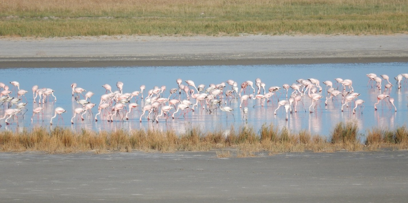Flamingoes on the Salt Pans