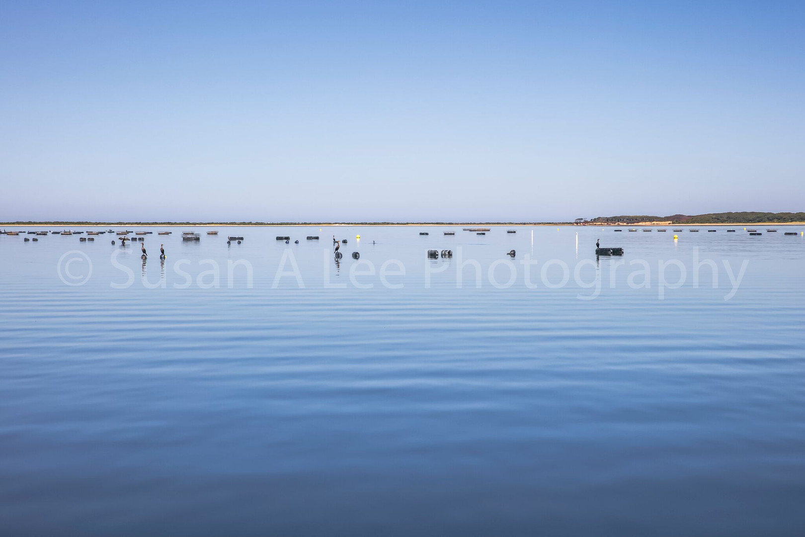 Oyster Beds with Crates