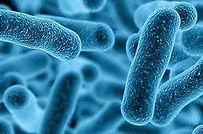 Bacteria.jpg