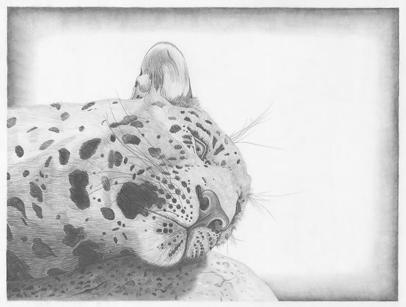 Lazy Leopard