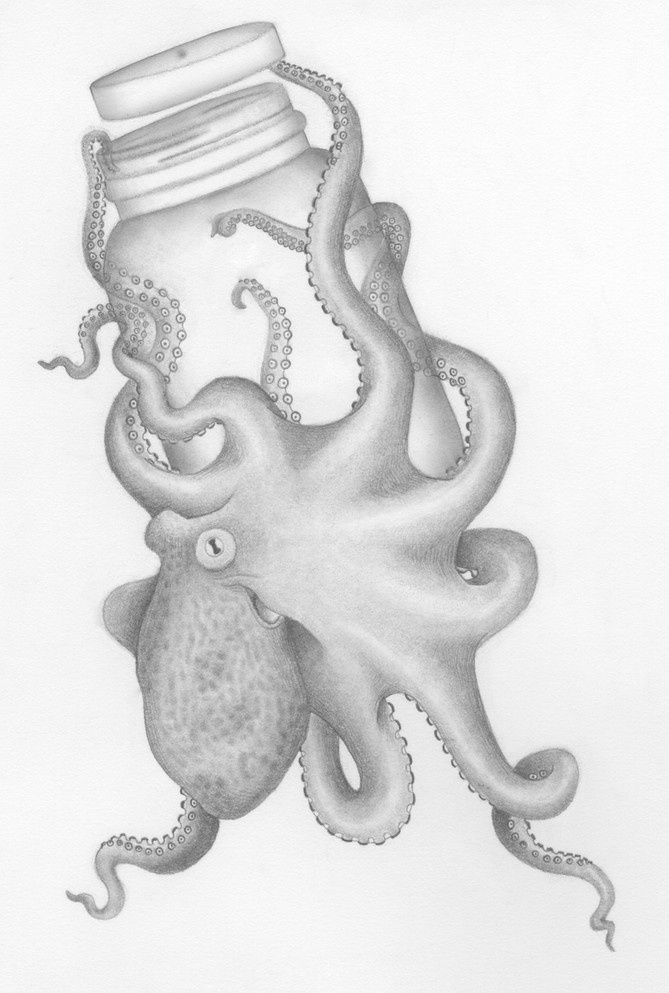 Crafty Cephalopod
