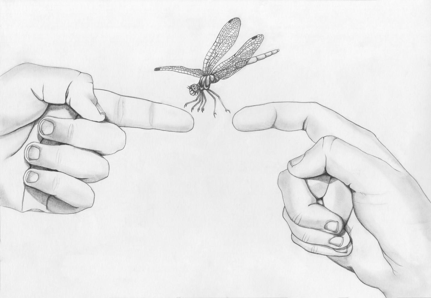 Dragonfly Friend