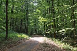 Forêt Banney Luxeuil-les-Bains