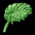 熱帯の葉8