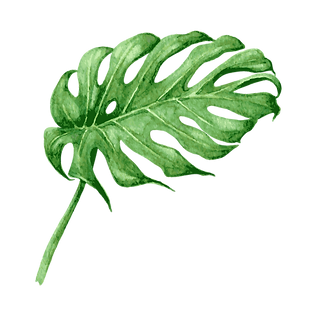 Les feuilles tropicales 8