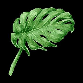 Folhas tropicais 8