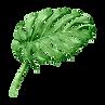 熱帶樹葉8