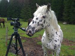 auch für Pferde interessant
