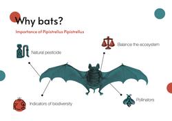PRESENTATION bats 1