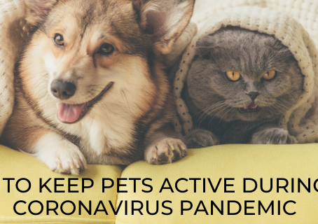 Ways to keep your pets active during the Coronavirus pandemic!