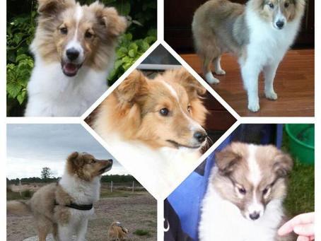 Wat er verandert door de komst van een pup