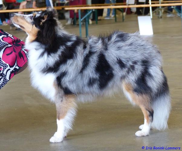 74 Cani Amano Delirant Isti Romani_0367.