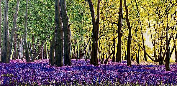 Vincent Smith Art - Bluebell Sunset III