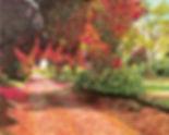 Vincent Smith Art - Kilmacurragh Walk IV