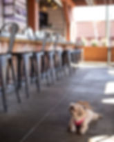 A Bushfire Kitchen patron's dog sitting on our dog-friendly patio by the bar at Menifee location