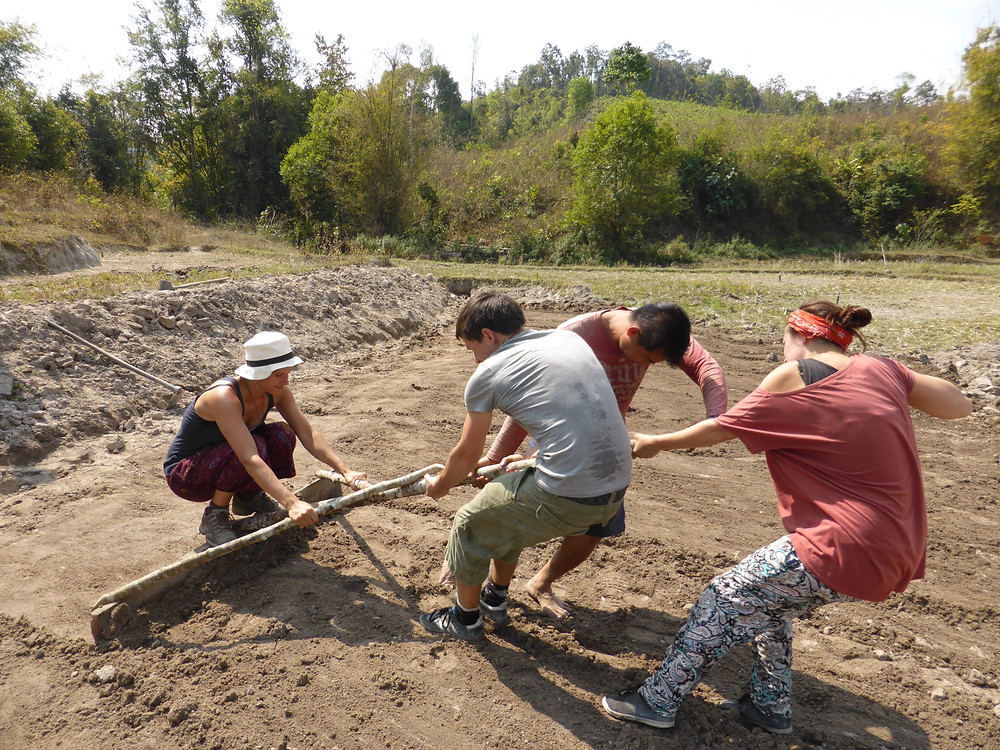 Feldarbeit auf dem Reisfeld in Thailand