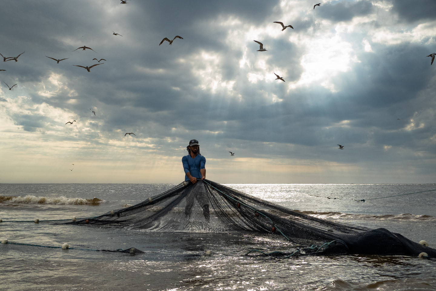 A caiçara man surrounded by seagulls pulls the fishing net during the traditional artisanal fishing of manjubas (Anchoviella lepidentostole) in Ilha Comprida, Sao Paulo state, Brazil, February 19, 2020.