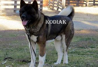 KODIAK_909-411x281.jpg