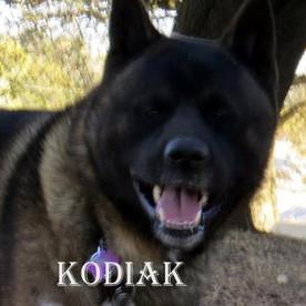 KODIAK_907-428x600.jpg