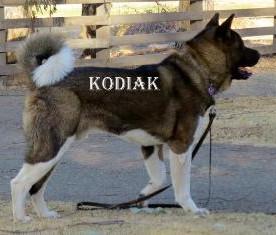 KODIAK_904-419x235.jpg