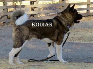 "ROYALTY'S   MR. PERFECTION                  ""KODIAK"""