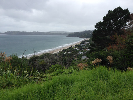 Waiheke Island aiming for carbon neutrality