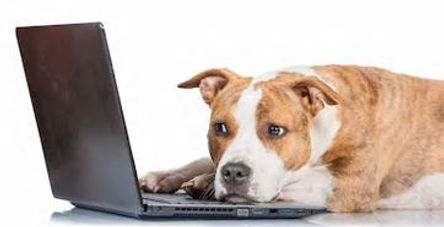 Laptopdog.JPG