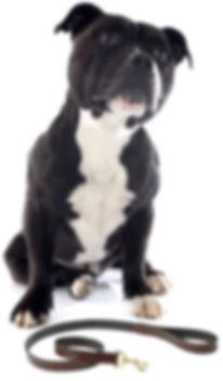 Dog with Lead.JPG