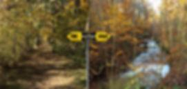 web art of walk image.jpg