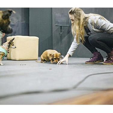 Talent Show Dog Psychology Guatemala 2017.jpg