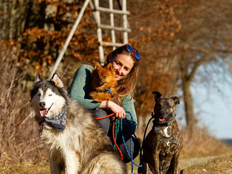 Wie wichtig ist Sozialisierung für Hunde?