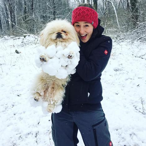 Pekinese im Schnee