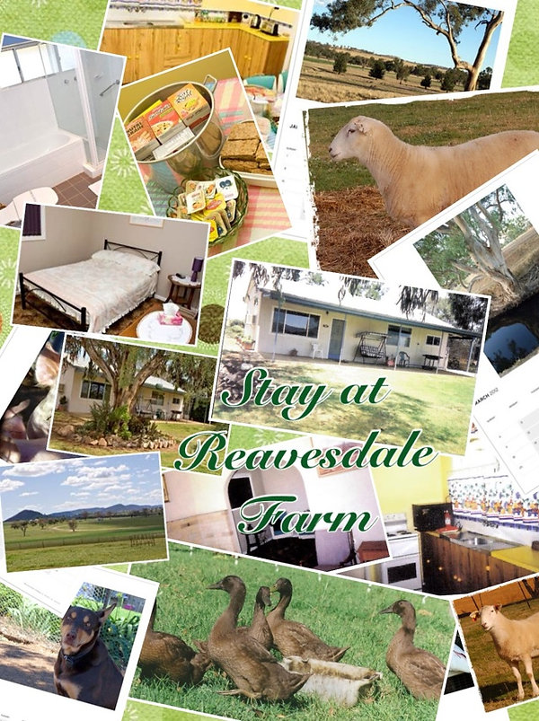 Murringo NSW, Wiltipoll, Sheep, Shedding, Gulgong, purchase, stud, bed and breakfast, accommodation, farm stay