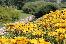 Flowerbeds at International Peace Garden, 45 miles north of Rugby, N.D.