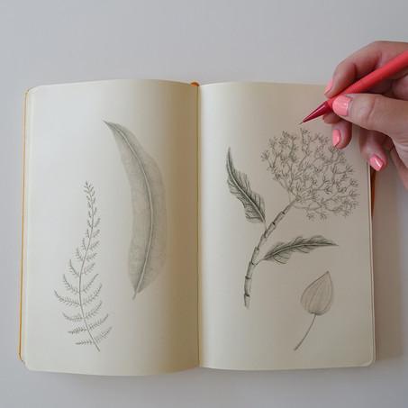 Reflexiones sobre el Dibujo