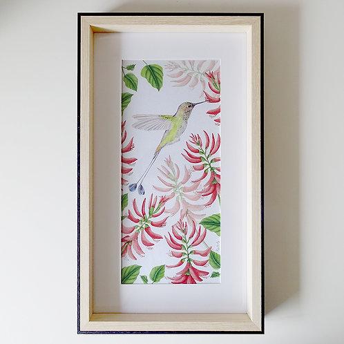 Picaflor cola de espátula - marco madera 25,5 x 43,5