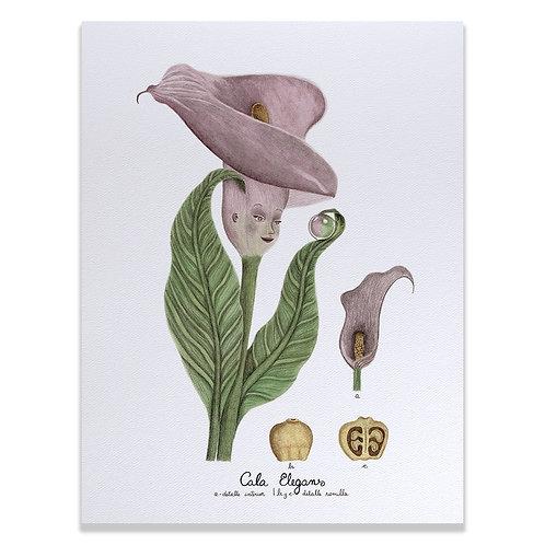 Cala elegans - Print 30x40