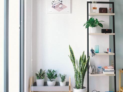 Book Shelves Storage