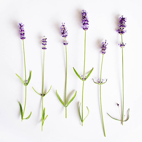 Tea Tree & Lavender Liquid Soap