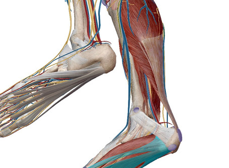 Plantar Fasciitis and Sports Performance