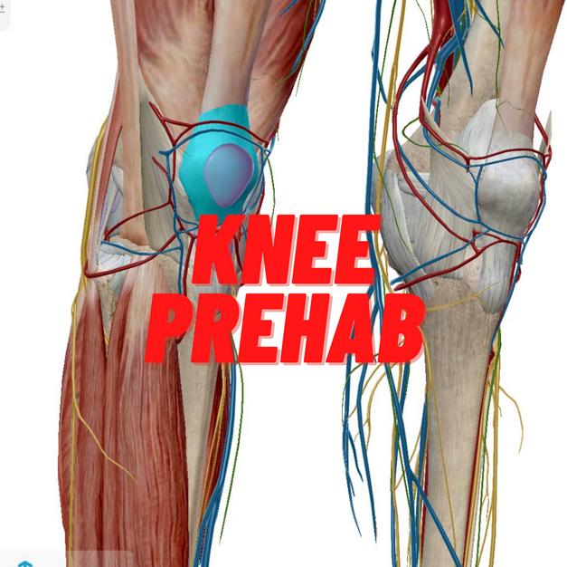 Knee    Prehab.png