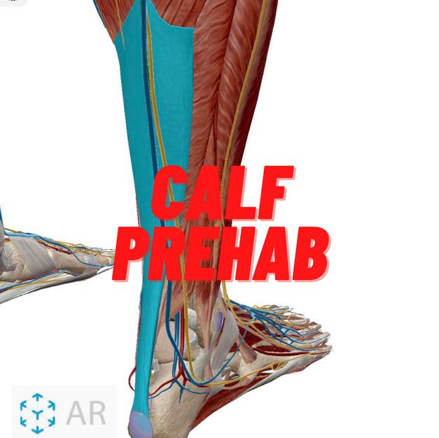 Calf Prehab.png