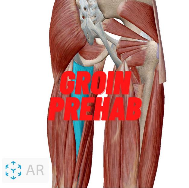 Groin Prehab.png