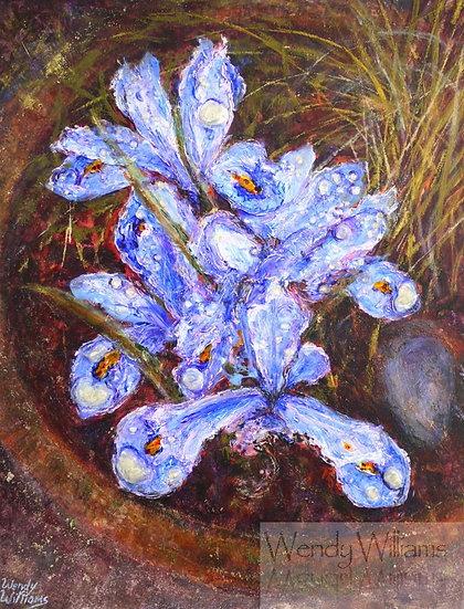Iris and Raindrops