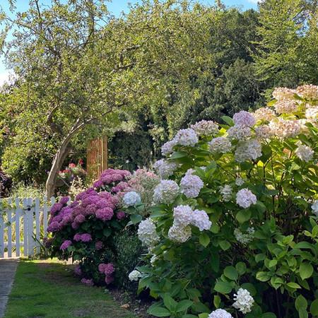 Saddlers Garden 5.jpg