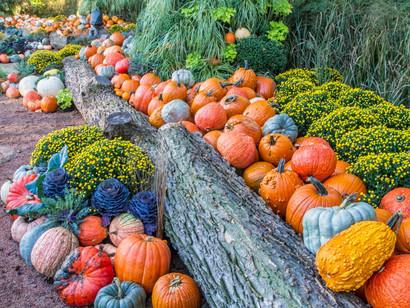 Unique Ways To Decorate With Pumpkins