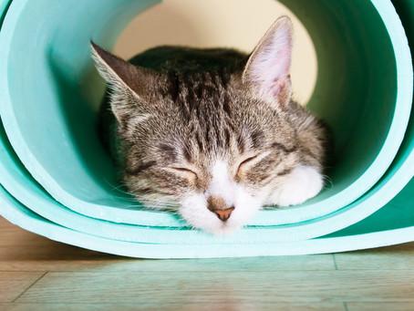 Entspannungskurs für einen tieferen Schlaf – zu Hause per Online-Live-Kurs