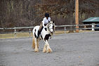 horse show image.jpg