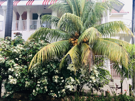 A Secret Gem in Negril: Rayon Hotel