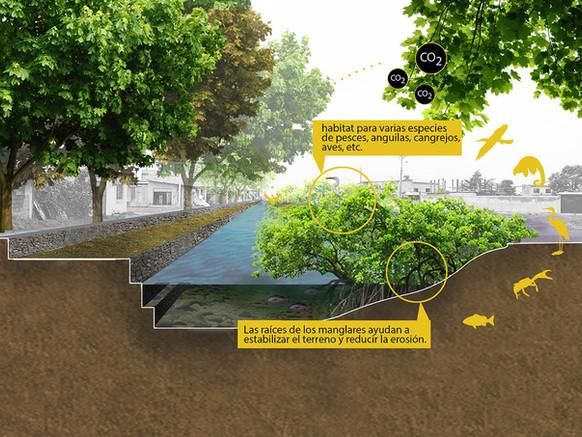 Benefícios do manguezal